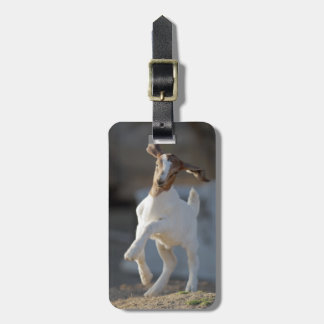 Kid goat playing in ground. tags for bags