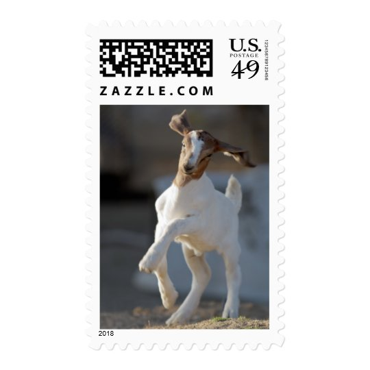 Kid goat playing in ground. postage