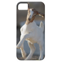 Kid Goat Playing iPhone SE/5/5s Case