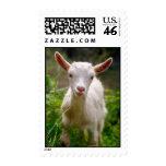 Kid Goat Stamp