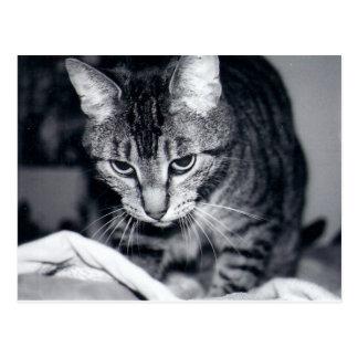 Kiki el gato - postal