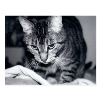 Kiki the Cat - Postcard