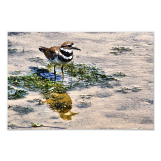 Kildeer Reflected in Water Photo Print