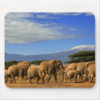Kilimanjaro And Elephants Mouse Pad
