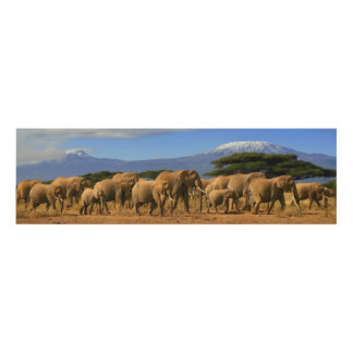Kilimanjaro And Elephants Panel Wall Art