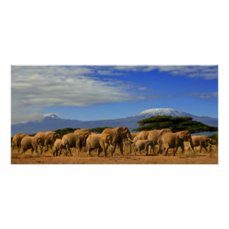 Kilimanjaro And Elephants Poster