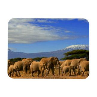 Kilimanjaro And Elephants Rectangular Photo Magnet