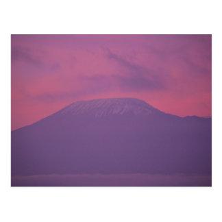 Kilimanjaro at Dawn Postcard