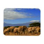 Kilimanjaro y elefantes imán foto rectangular