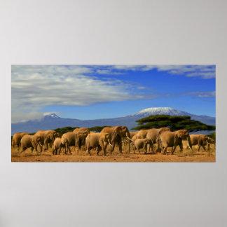 Kilimanjaro y elefantes póster