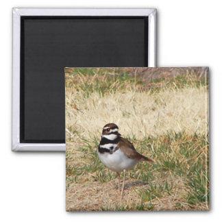 Killdeer bird magnet