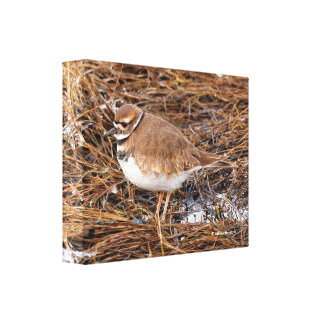 Killdeer in the Freezing Mudflats Canvas Print