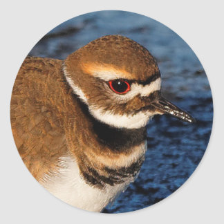 Killdeer on the Icy Mudflats Classic Round Sticker