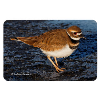 Killdeer on the Icy Mudflats Magnet