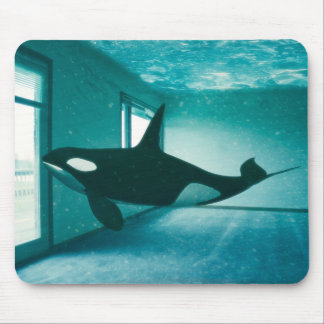 Killer Apartment Mouse Pad