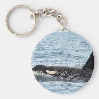 Killer Orca Male Whale San Juan Island Key Chain