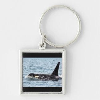 Killer Orca Male Whale San Juan Island Keychain
