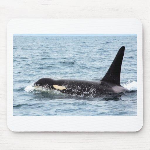 Killer Orca Male Whale San Juan Island Mouse Pads