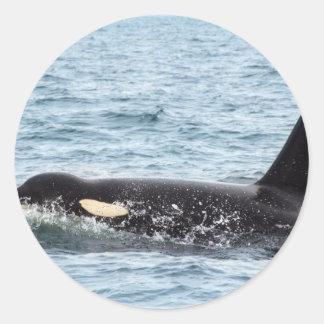 Killer Orca Male Whale San Juan Island Sticker