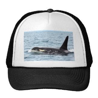 Killer Orca Male Whale San Juan Island Trucker Hat