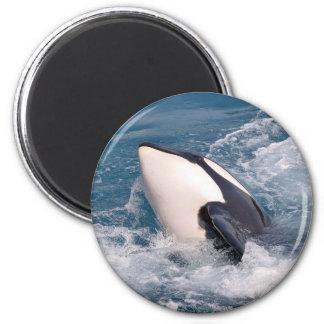 Killer whale 2 inch round magnet