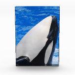 Killer Whale Acrylic Award