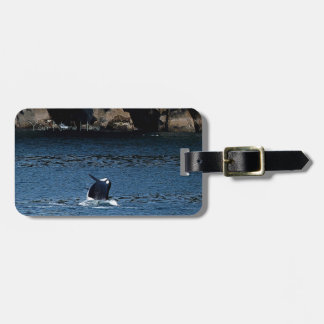 Killer Whale Alaska Wildlife luggage tag