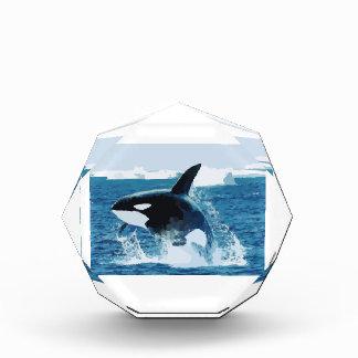 Killer Whale Award
