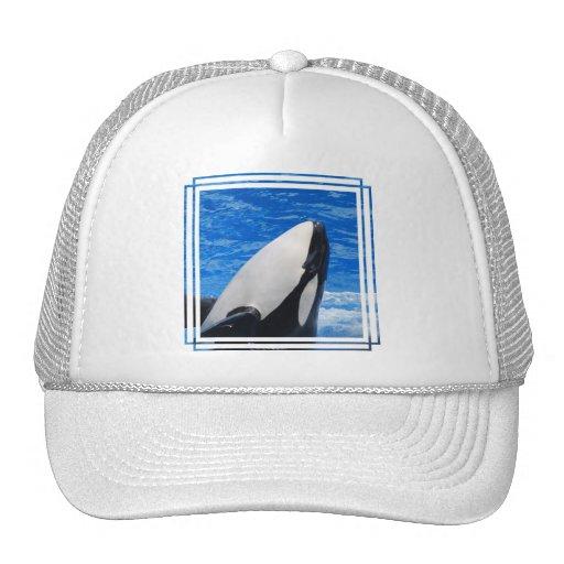 Killer Whale Baseball Hat