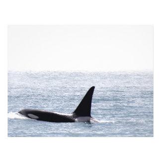 Killer Whale Blackberry Letterhead