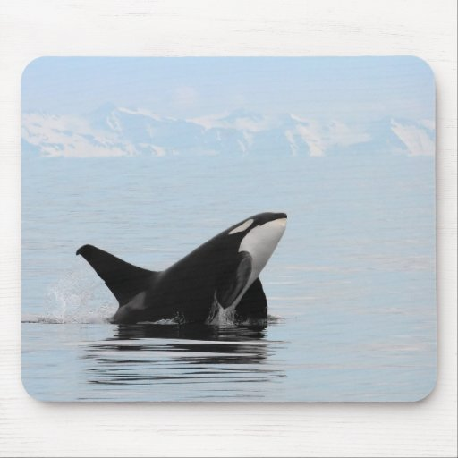 Killer whale breaching mouse pad