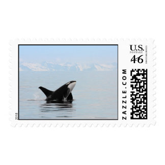 Killer whale breaching postage stamp