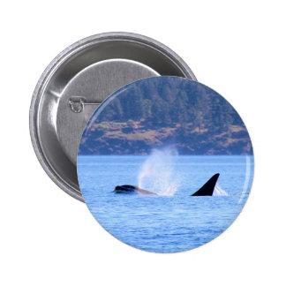 Killer Whale Button