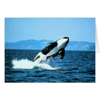 Killer Whale Greeting Cards