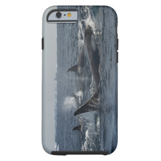killer whale tough iPhone 6 case