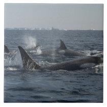 killer whale ceramic tile