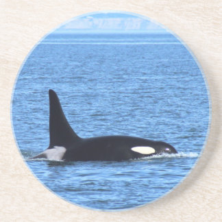 Killer Whale Drink Coaster