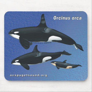 Killer Whale Family Mousepad - blue texture bkg