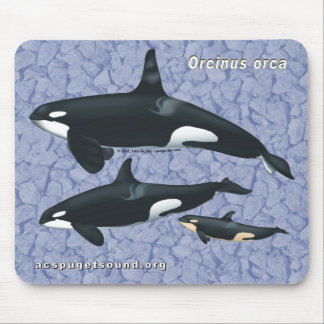 Killer Whale Family Mousepad on rock background