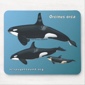 Killer Whale Family Mousepad on Teal Background