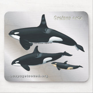 Killer Whale Family Mousepad Silver Texture bkg