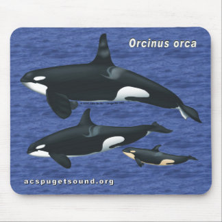 Killer Whale Family Mousepad with Water Bkg 1