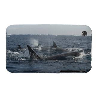 killer whale iPhone 3 Case-Mate case