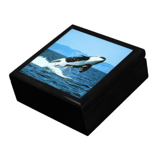 Killer Whale Jewelry Box