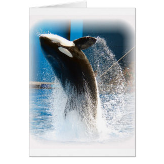 Killer Whale jumping Card