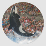 Killer whale jumping classic round sticker