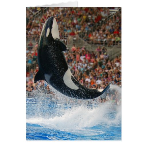 Killer whale jumping greeting card