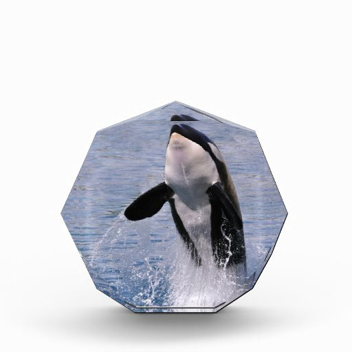 Killer whale jumping out of water acrylic award