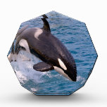 Killer whale jumping out of water award