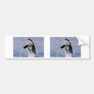 Killer whale jumping out of water car bumper sticker